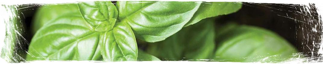 Растения против комари - Basil