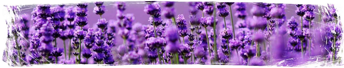 Растения против комари - Lavender