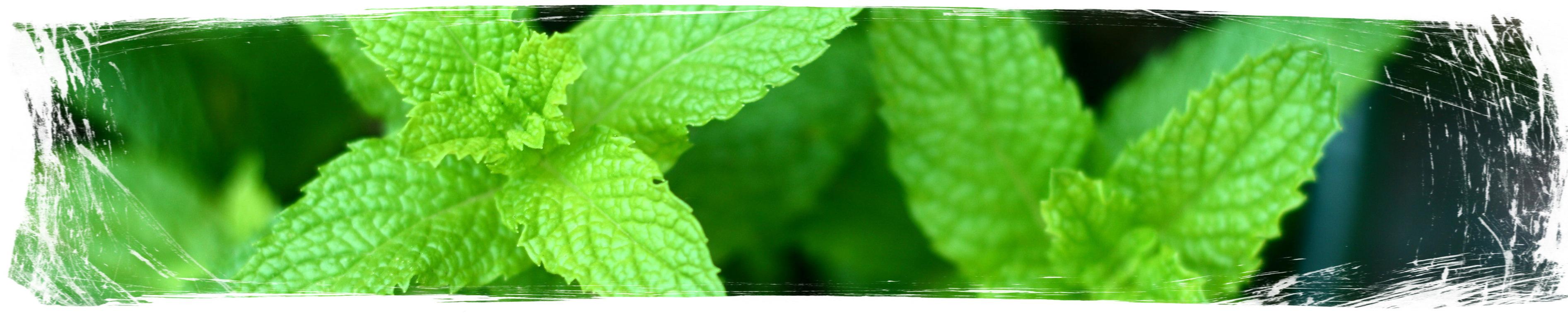 Растения против комари - Mint