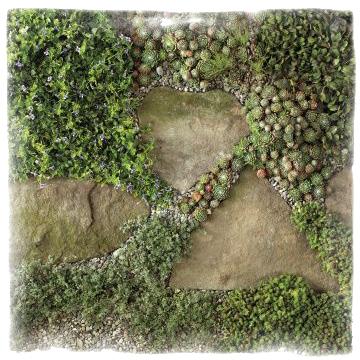 Комбинация от многогодишни цветя - Sedum & Thyme