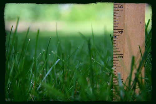Тревна площ  - височина
