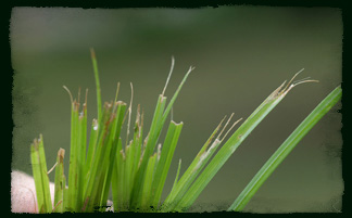 Тревна площ - остриета