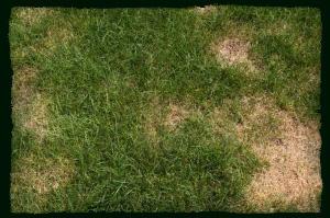 Тревна площ - поливане