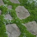 Скални кътове и алпинеуми - плочник