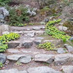 Скални кътове и алпинеуми - стъпаловидна тераса